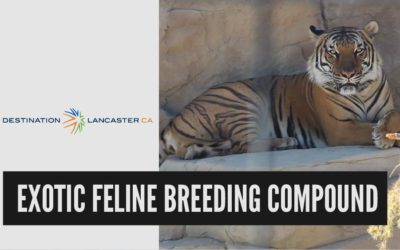 Exotic Feline Breeding Compound | Destination Lancaster