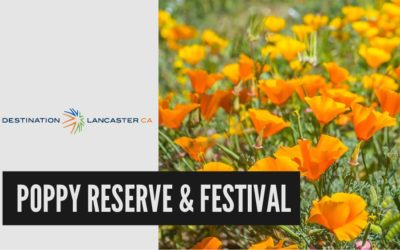 California Poppy Reserve & California Poppy Festival | Destination Lancaster