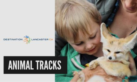 Animal Tracks | Destination Lancaster